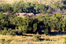 A large herd of elephants passed through the valley