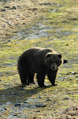 Bear Enclosure WCC - Patron.JPG