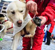 Iditarod2015_0119.JPG