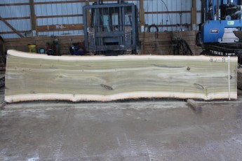 "082 - 8 Poplar 2 1/2"" x 42 - 33"" Wide x 16' Long  Kiln dried"