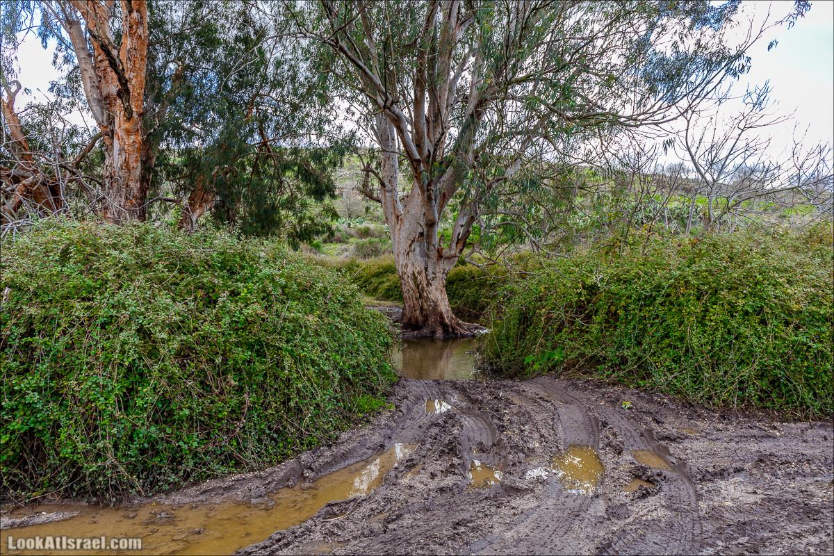 Путешествие 4x4 по горам Рамот Менаше | 4x4 Travel in Ramot Menashe | טיול שטח ברמות מנשה | LookAtIsrael.com - Фото путешествия по Израилю