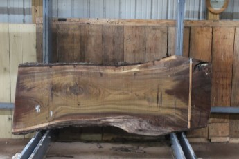 "568  Walnut -7 10/4 x  37"" x  28"" Wide x  8'  Long"