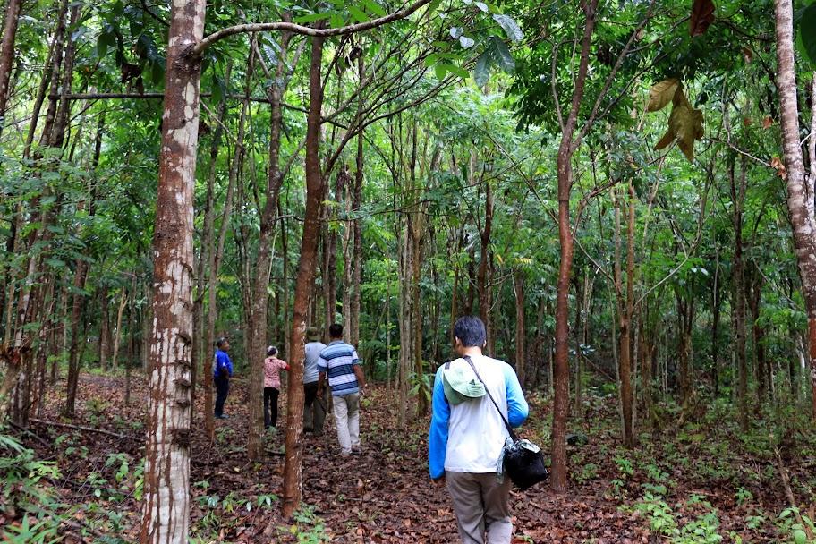 Berjalan di keteduhan tajuk pohon Kebun Raya Minahasa