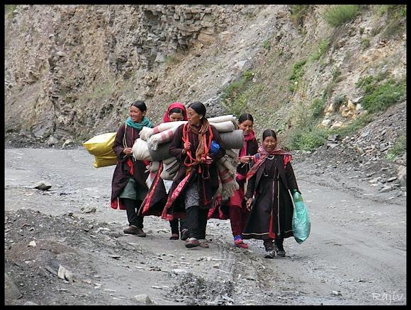 himachali women