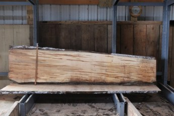 "567  Maple Ambrosia -8 10/4x 29"" x 19"" Wide x  10'  Long"