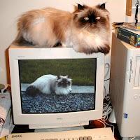 Cats0014sm.JPG