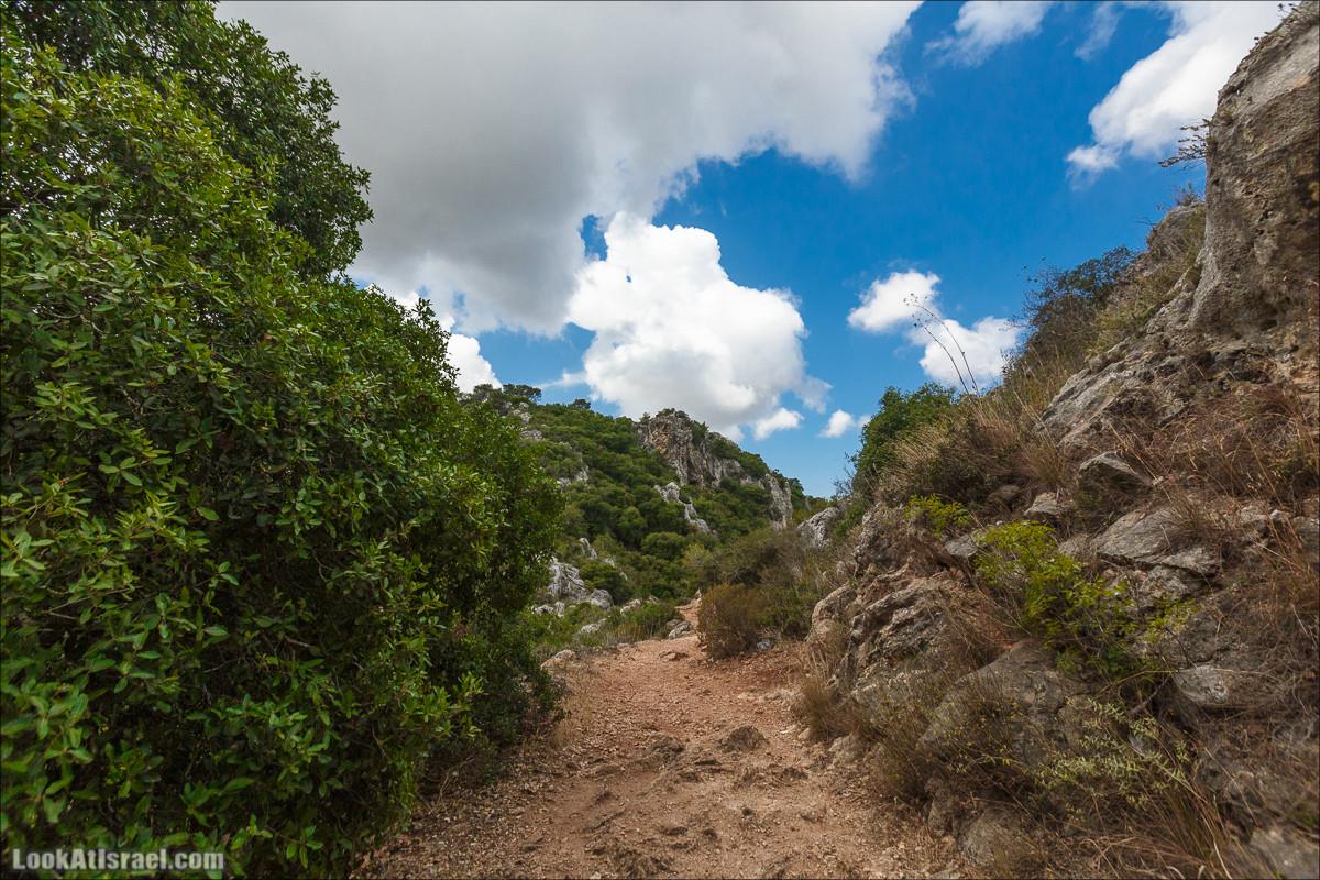 Гора Кармель, Маленькая Швейцария - вдоль ручья Келах и Галим | LookAtIsrael.com - Фото путешествия по Израилю