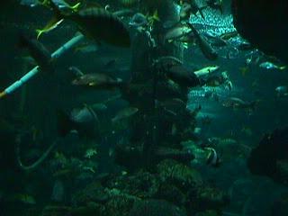 1020Aquarium Fish Schooling