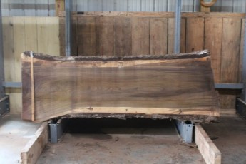 "568  Walnut -2 10/4 x  32"" x  27"" Wide x  8'  Long"