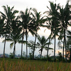 0428_Indonesien_Limberg.JPG