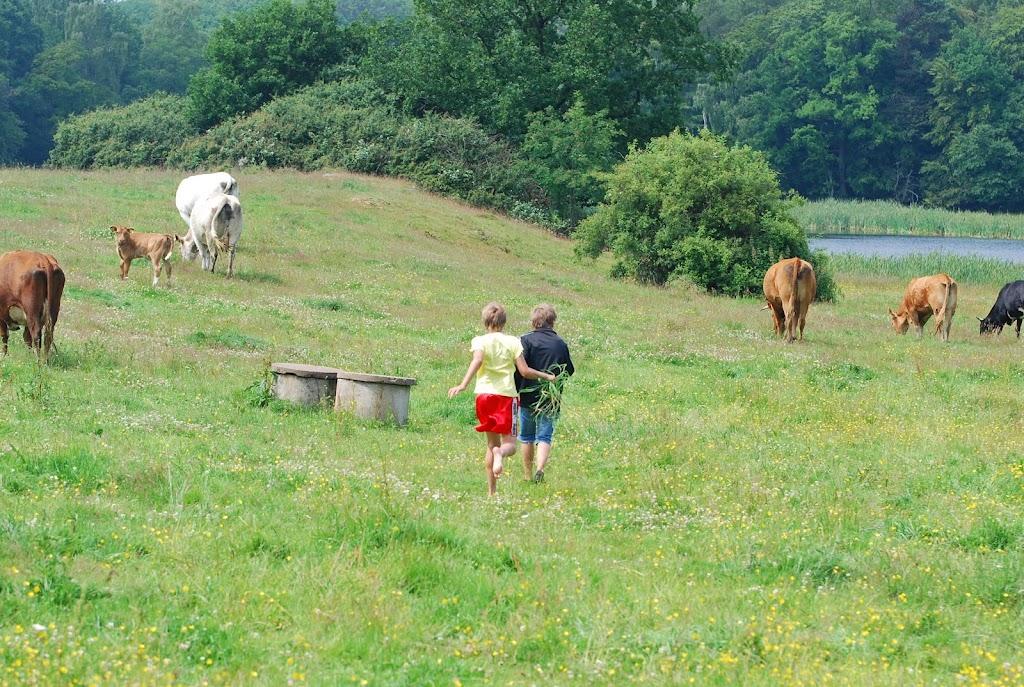 Cornelius och Loke försöker att mata kor.