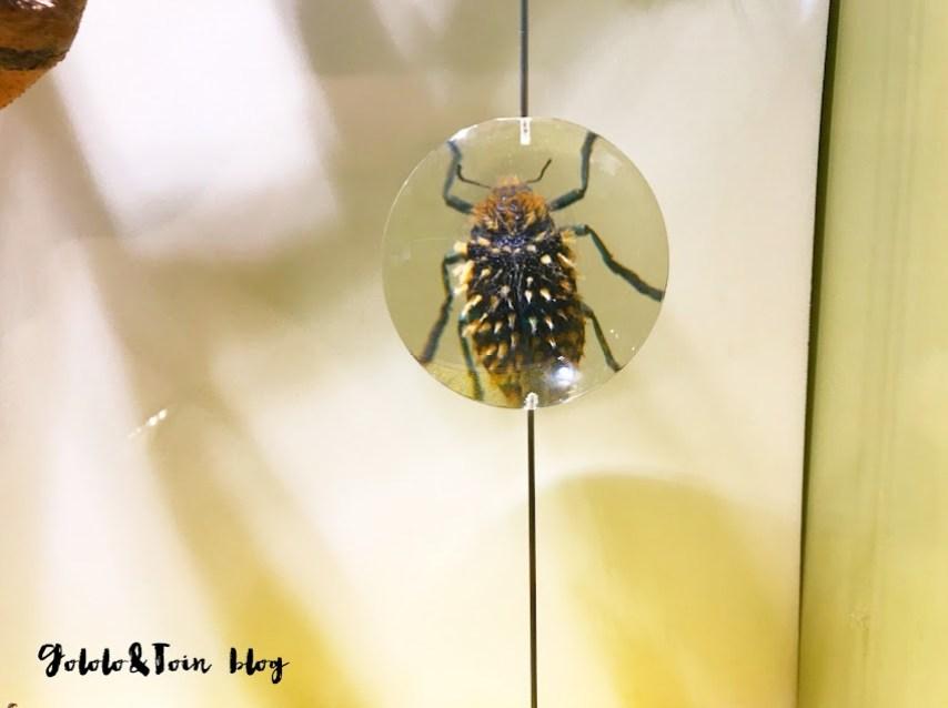 insectpark-centro-naturaleza-insectos-ocio-familia