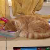 katten - 2010-11-09%2B11-10-15%2B-%2BDSCF1776.JPG