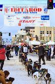 Iditarod2015_0239.JPG