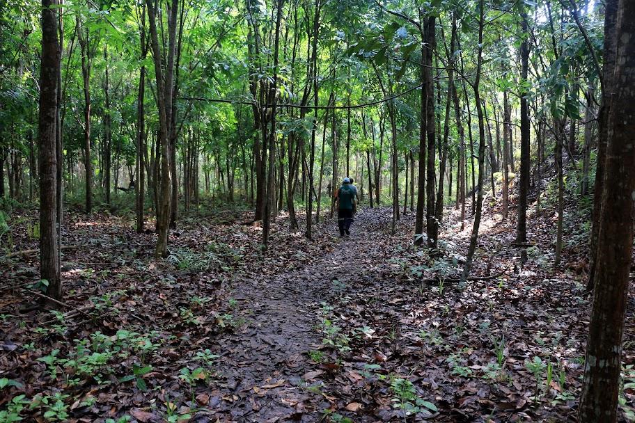 Umumnya yang ditanam di Kebun Raya Minahasa adalah tanaman industri