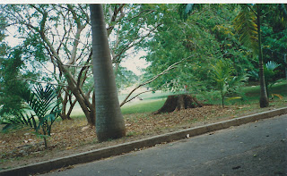 5190Darwin Botanic Gardens