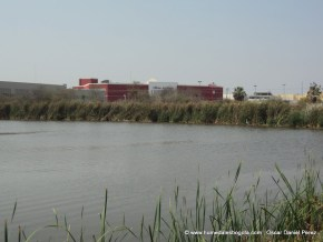 Humedal Laguna de Camarón 4