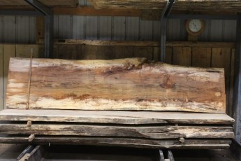 """610 Maple Spalted - 3 10/4x 30"""" x 25"""" Wide x  10'  Long"""