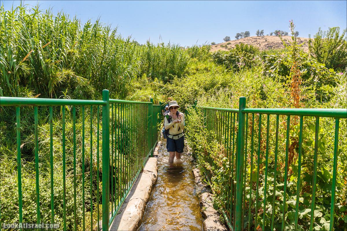 Родники Голанских высот | Streams of Golan Heights |נחלים של רמת הגולן | LookAtIsrael.com - Фото путешествия по Израилю