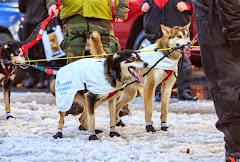 Iditarod2015_0373.JPG