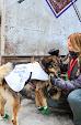 Iditarod2015_0053.JPG