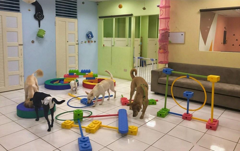 堤柇Tiere Pet Hotel寵物住宿人文咖啡