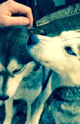 dogs 5.jpg