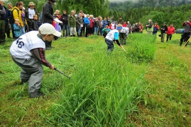 Kosidba u Norveskoj- Turisticka organizacija opštine Ljig200