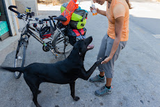 Nice stray dogs in Turkey
