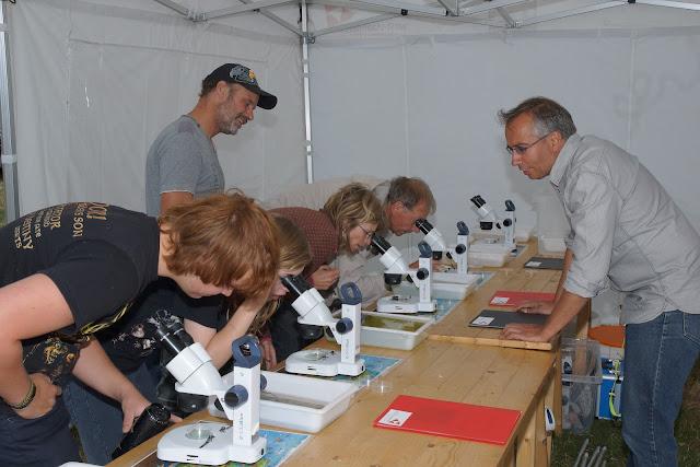 beestjes uit het water bekijken onder microscoop