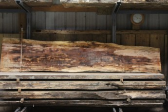 """610 Maple Spalted - 1 10/4x 24"""" x 16"""" Wide x  10'  Long"""