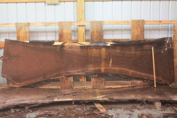 Walnut 319-11  Length 12', Max Width (inches) 44 Min Width (inches) 25 Thickness 10/4  Notes :Kiln Dried