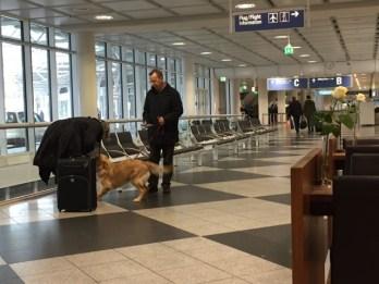 ミュンヘン空港のわんこ