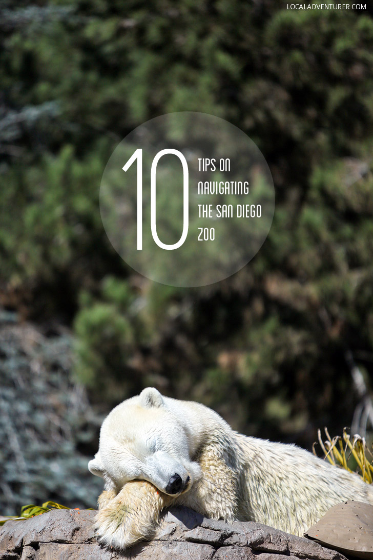 10 Tips for Navigating the San Diego Zoo CA.