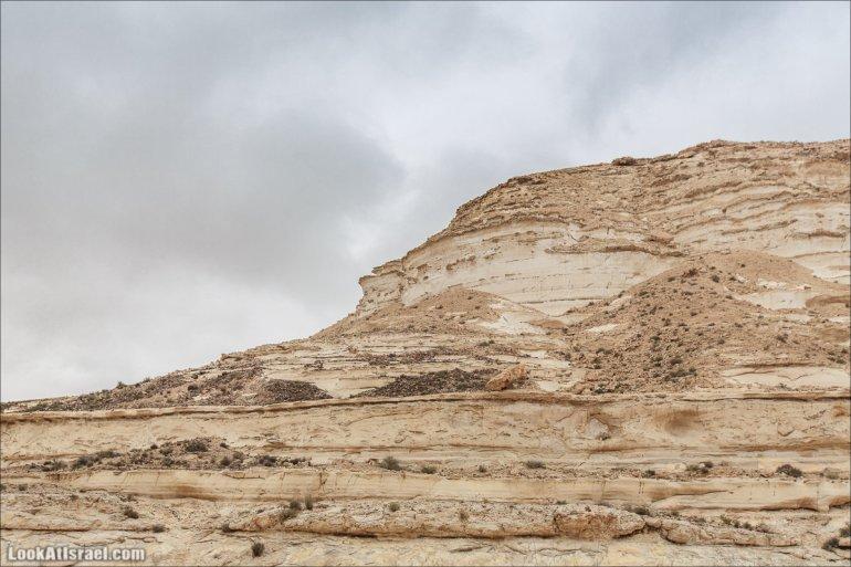 Пустыня Негев в Израиле | Negev desert in Israel | מדבר נגב גשום | LookAtIsrael.com - Фото путешествия по Израилю