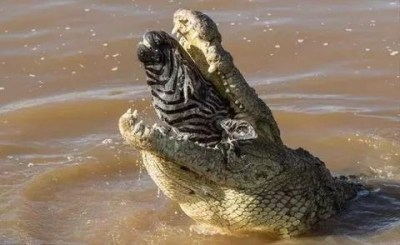 Proven Reasons Why Crocodiles Cry While Eating Their Preys Proven Reasons Why Crocodiles Cry While Eating Their Preys 1602498489695381 0 Proven Reasons Why Crocodiles Cry While Eating Their Preys Proven Reasons Why Crocodiles Cry While Eating Their Preys 1602498489695381 0
