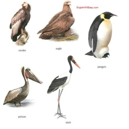 Exemple de păsări