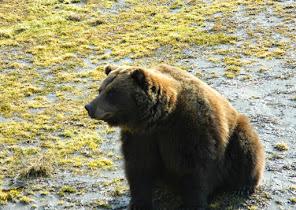 Bear Enclosure WCC - Patron 3.JPG