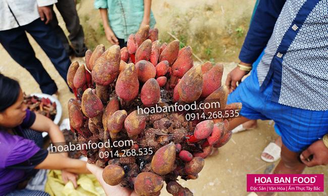 Nấm Ngọc Cẩu tươi | HOA BAN FOOD™