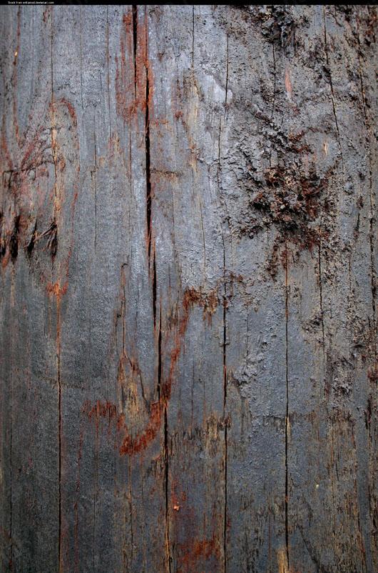 textura madeira escura download