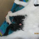 katten - 2011-02-24%2B20-16-54%2B-%2BIMG_0233.JPG