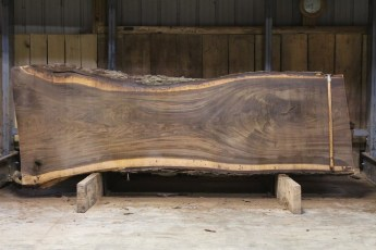 "616 Walnut - 3 10/4 x 46"" x 30"" Wide x  10'  Long"