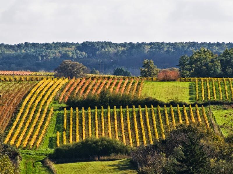 (2)vignes-vallee-du-cher©ADT41-JP