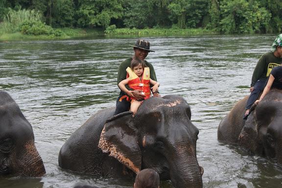Visitar Elephants World en Kanchanaburi