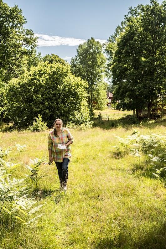 Svenske blåbær - Mikkel Bækgaards Madblog-6.jpg