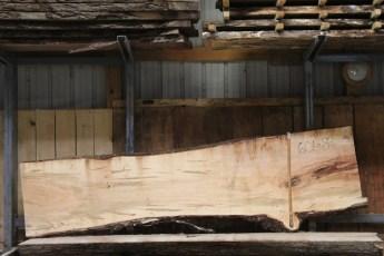 "601  Ambrosia Maple - 8 8/4x 36"" x 24"" Wide x  10'  Long"