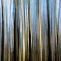 Ashridge abstract_Elaine Rushton.jpg