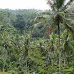 0499_Indonesien_Limberg.JPG