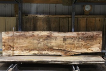 """610 Maple Spalted - 6 10/4x 30"""" x 27"""" Wide x  10'  Long"""