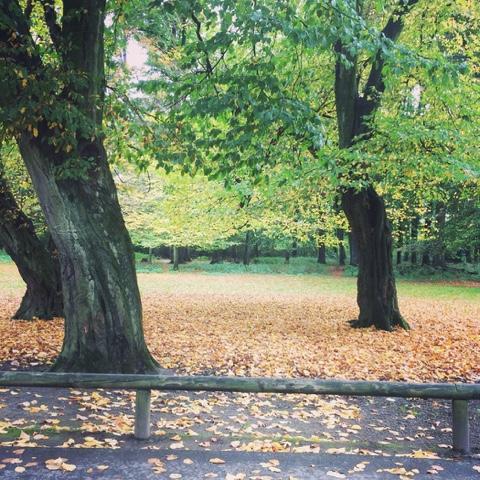 Herbstimpressionen und zwei gesunde Süßigkeiten (vegan)